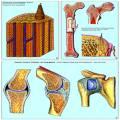 Die Tierzelle (Cytologie)