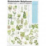 Einheimische Heilpflanzen - Poster