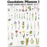 Geschützte Pflanzen 1 - Poster