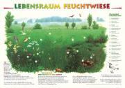 Lebensraum Feuchtwiese - Papierposter