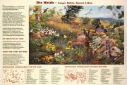 Die Heide - karger Boden, buntes Leben - Papierposter