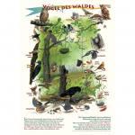 Vögel des Waldes - Poster laminiert