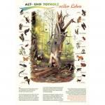 Alt- und Totholz - voller Leben - Poster laminiert