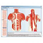 Skelett, Muskulatur und Bewegungsapparat des Menschen