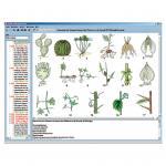 Anatomie der Blütenpflanzen (Phanerogamen)