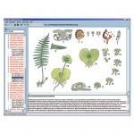 Anatomie der Blütenlosen Pflanzen (Kryptogamen)