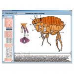 Parasiten und Krankheiten des Menschen