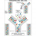 """Aufbautransparente-Mappe """"Genetik"""""""