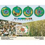 Globale Ökologie - Die Zukunft unserer Umwelt