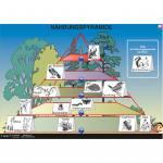 Interaktive digitale Tafelbilder ÖKOLOGIE 1