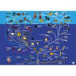 Stammbusch des Tierreichs und die Evolution