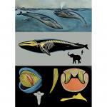 Lehrtafel zum Blauwal