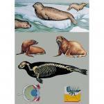 Seehunde und andere Robben