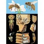 Lehrtafel zur Honigbiene