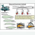 Aufbautransparente-Mappe -Mechanik 2-
