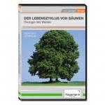Der Lebenszyklus von Bäumen - Ökologie des Waldes