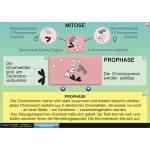 Mitose - Meiose