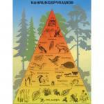 Nahrungspyramide im Wald
