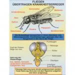 Fliegen übertragen Krankheitserreger