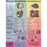Transparent zur Winterruhe