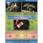 Cannabis: Haschisch und Marihuana