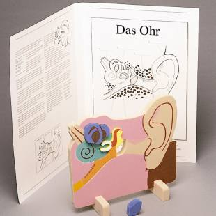 """Anatomisches Modell """"Das Ohr"""""""