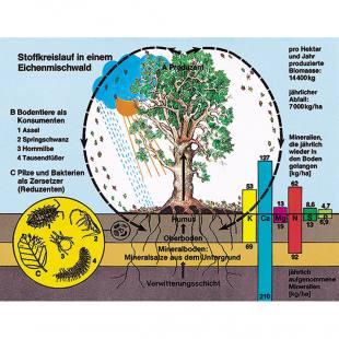 Bodenbiologie und Umwelt - Ökologische Zusammenhänge
