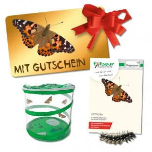 Schmetterlingszucht-Set