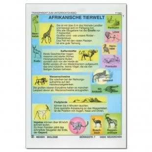 Afrikanische Tierwelt Einzeltranparent