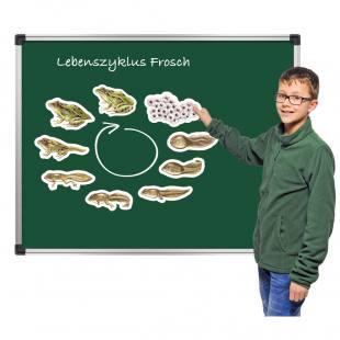"Lebenszyklus ""Frosch"""