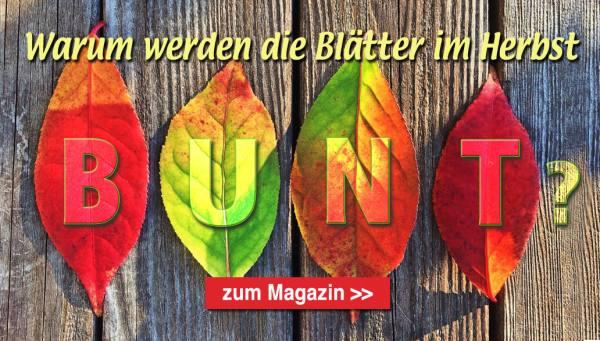 Startseite Magazin Bunte Blätter