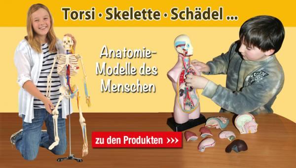 Startseite Torsen, Skelette, Schädel