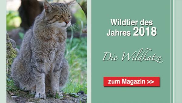 Startseite Wildkatze