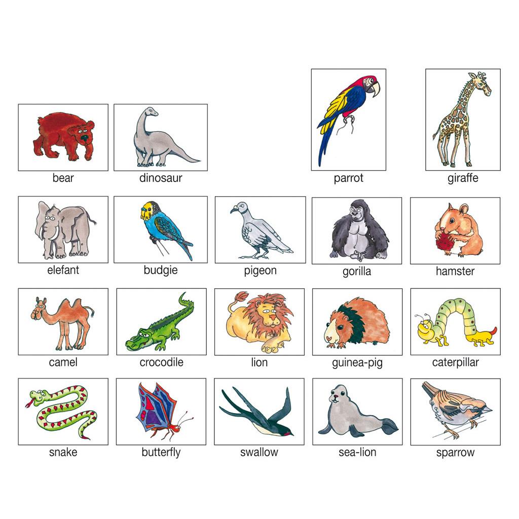 Bild- Wortkarten - \