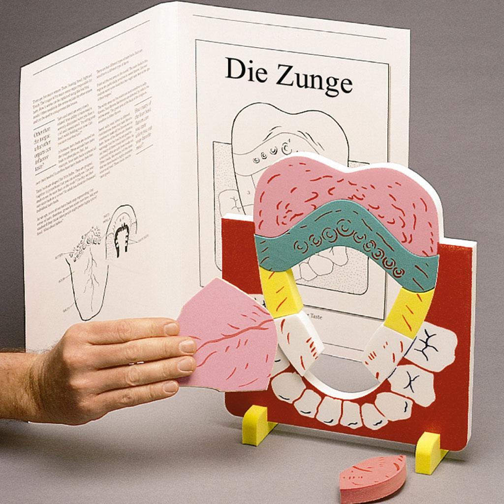 """Anatomisches Modell """"Die Zunge"""""""