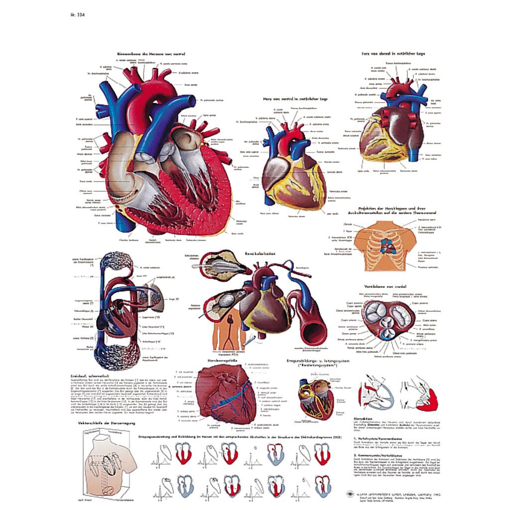 Das menschliche Herz - Poster-W-21114UB
