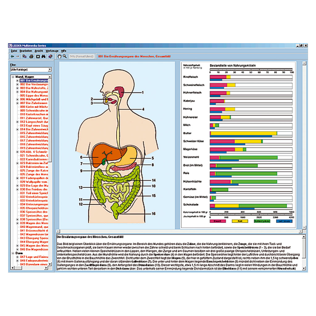 Ernährungsorgane und Stoffwechsel des Menschen-W-22017