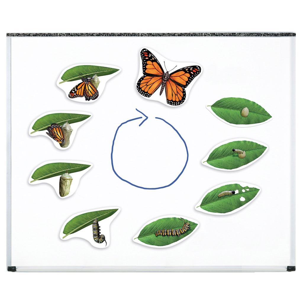 Vögel, Frösche, Schmetterlinge, Bienen