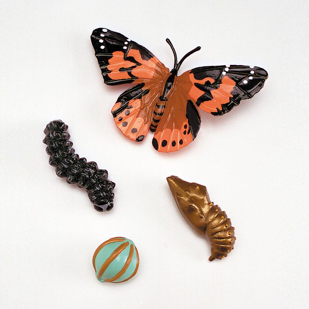 Lebenszyklus Schmetterling