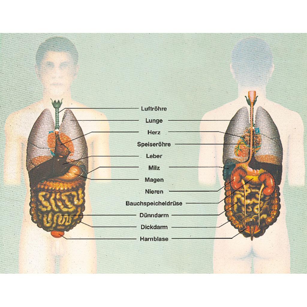 Der Mensch: Innere Organe - Gesundheit und Krankheit-W-2873
