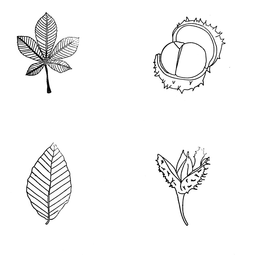 Stempelsets in verschiedener Auswahl - hier online im WL