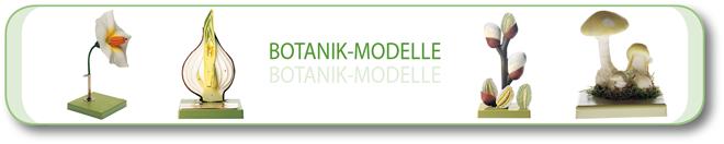 Botanik – Modelle