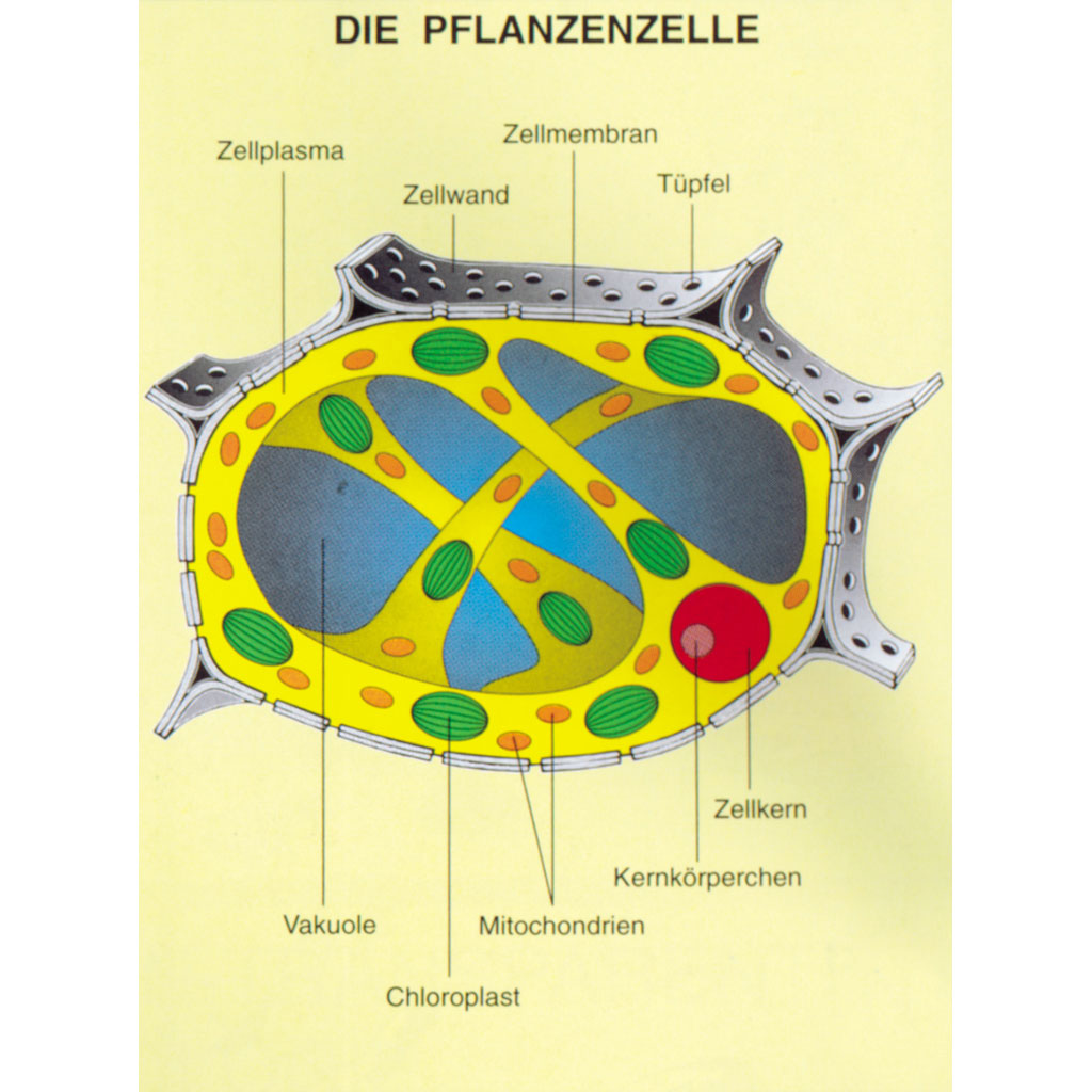 Tolle Zellmembran Färbung Arbeitsblatt Fotos - Super Lehrer ...