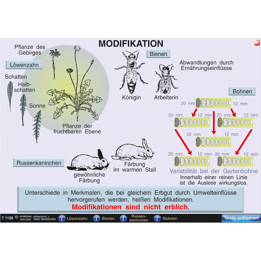 Mutation - Modifikation-ST 1016