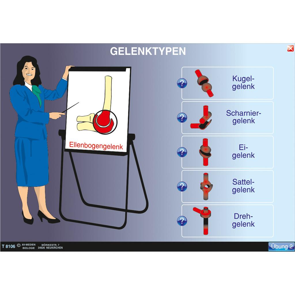 Gelenke und Gelenktypen-ST 8016