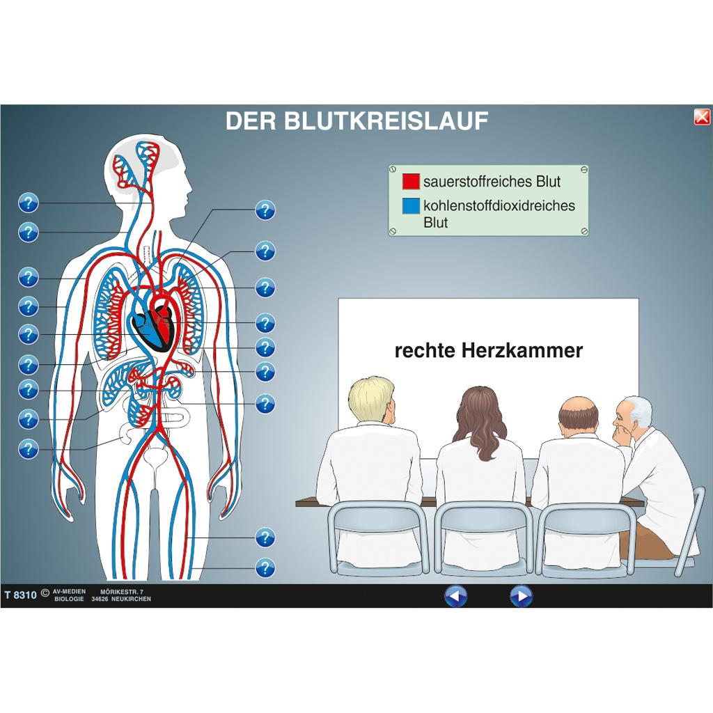 Beste Das Blutsystem Anatomie Und Physiologie Fotos - Menschliche ...