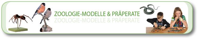Zoologie – Modelle und Präparate
