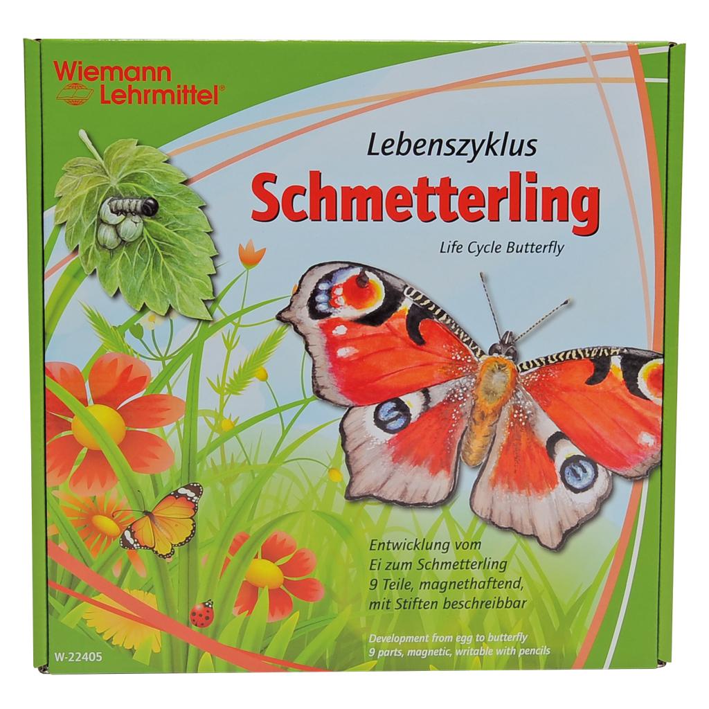 """Lebenszyklus """"Schmetterling"""""""